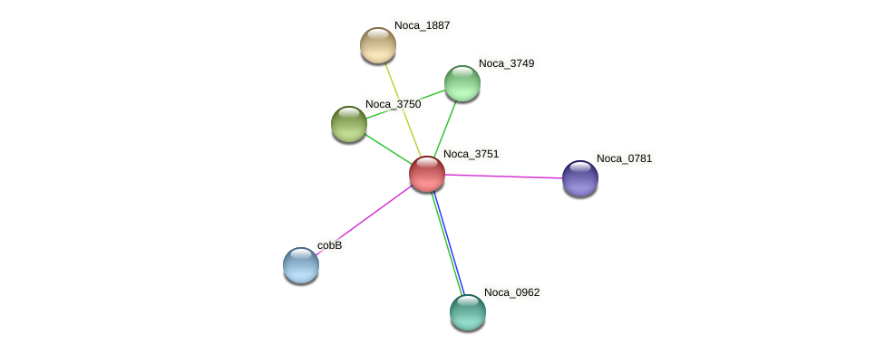 Noca_3751 protein (Nocardioides sp. JS614) - STRING interaction network