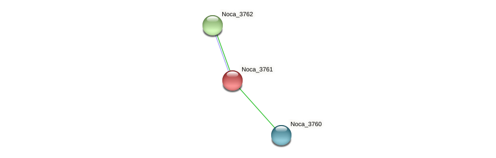 Noca_3761 protein (Nocardioides sp. JS614) - STRING interaction network