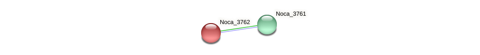 Noca_3762 protein (Nocardioides sp. JS614) - STRING interaction network