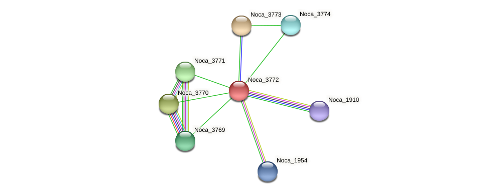 Noca_3772 protein (Nocardioides sp. JS614) - STRING interaction network