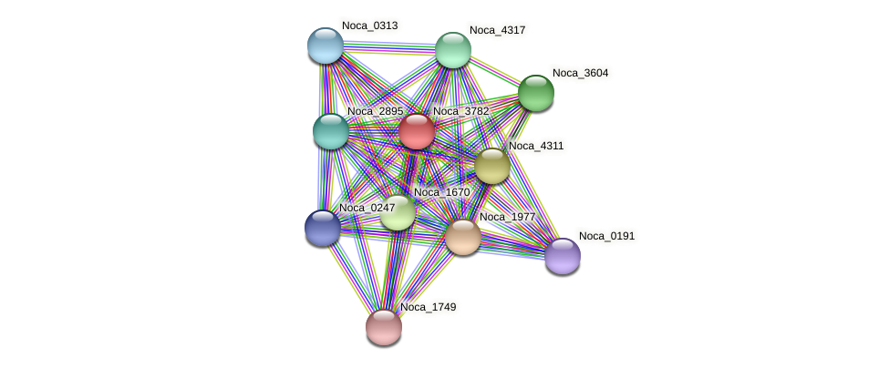 Noca_3782 protein (Nocardioides sp. JS614) - STRING interaction network