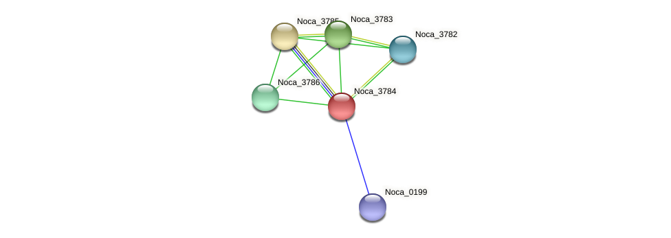 Noca_3784 protein (Nocardioides sp. JS614) - STRING interaction network