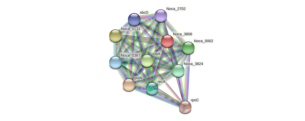 Noca_3806 protein (Nocardioides sp. JS614) - STRING interaction network