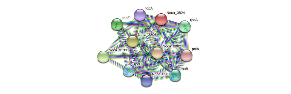 Noca_3824 protein (Nocardioides sp. JS614) - STRING interaction network