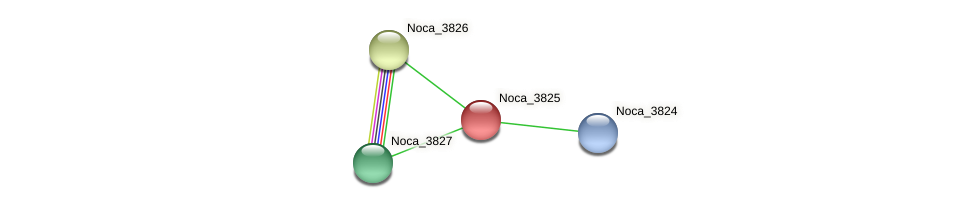 Noca_3825 protein (Nocardioides sp. JS614) - STRING interaction network
