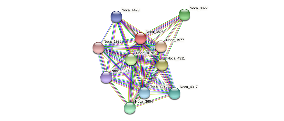Noca_3826 protein (Nocardioides sp. JS614) - STRING interaction network
