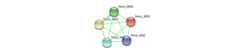 Noca_3828 protein (Nocardioides sp. JS614) - STRING interaction network