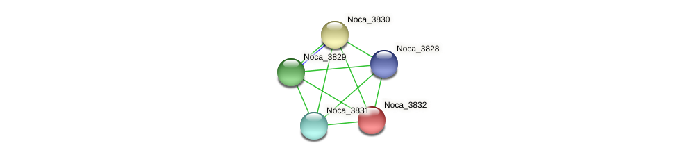 Noca_3832 protein (Nocardioides sp. JS614) - STRING interaction network