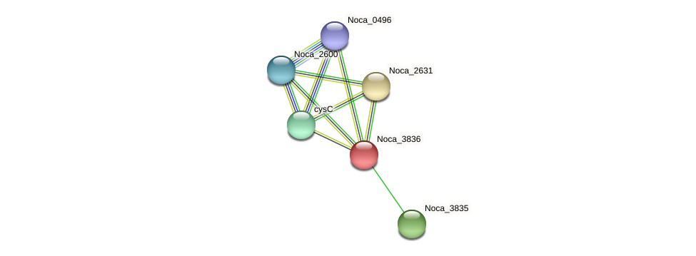 Noca_3836 protein (Nocardioides sp. JS614) - STRING interaction network