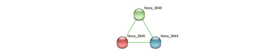 Noca_3845 protein (Nocardioides sp. JS614) - STRING interaction network