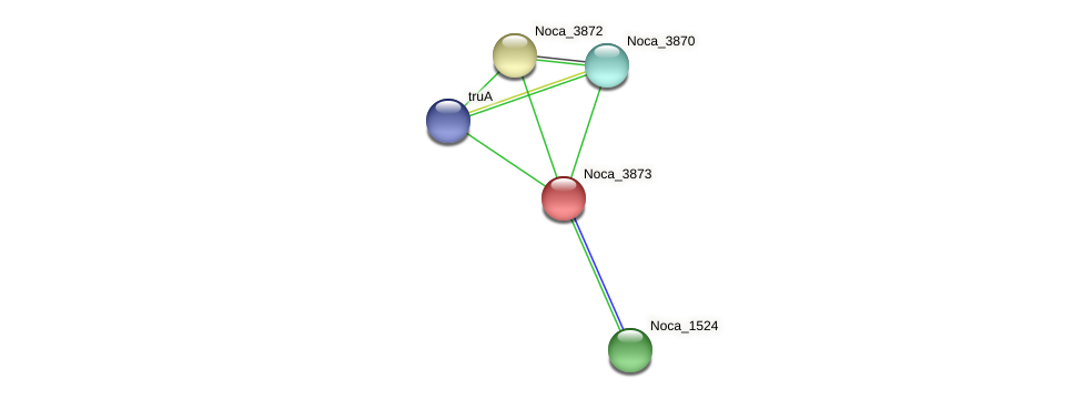 Noca_3873 protein (Nocardioides sp. JS614) - STRING interaction network