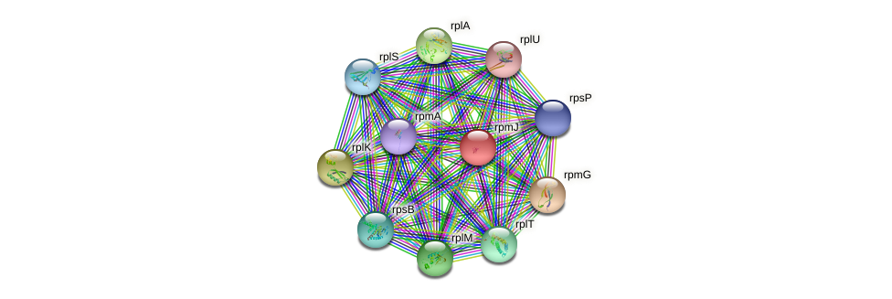 rpmJ protein (Nocardioides sp. JS614) - STRING interaction network
