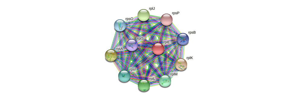 rplE protein (Nocardioides sp. JS614) - STRING interaction network
