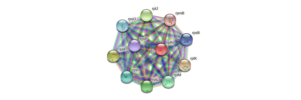 rplN protein (Nocardioides sp. JS614) - STRING interaction network