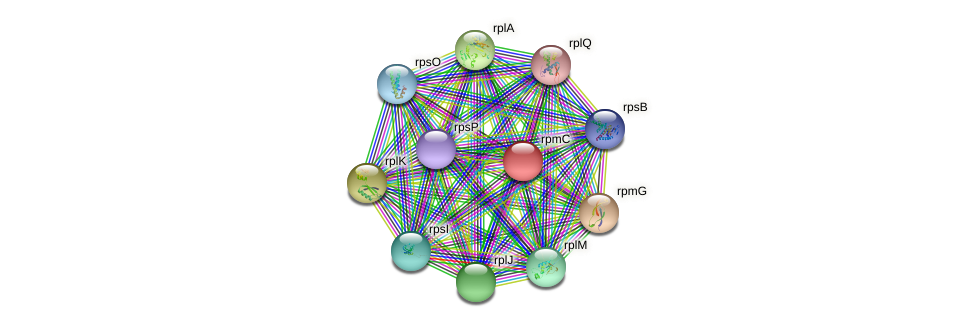 rpmC protein (Nocardioides sp. JS614) - STRING interaction network