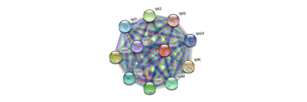 rplB protein (Nocardioides sp. JS614) - STRING interaction network