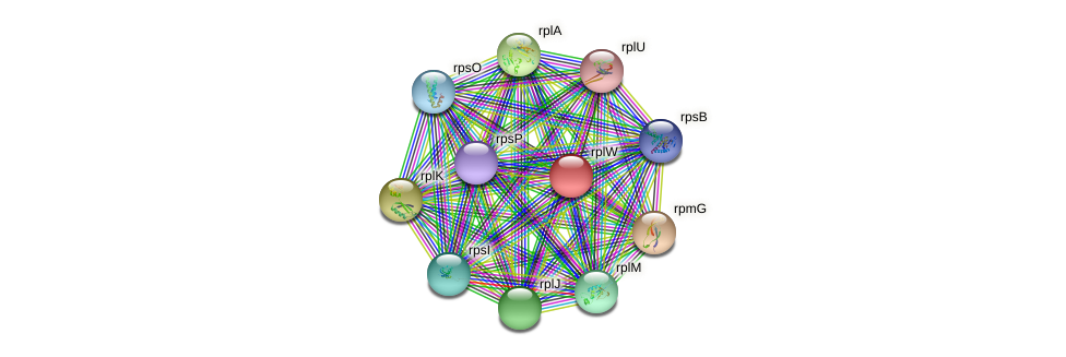 rplW protein (Nocardioides sp. JS614) - STRING interaction network