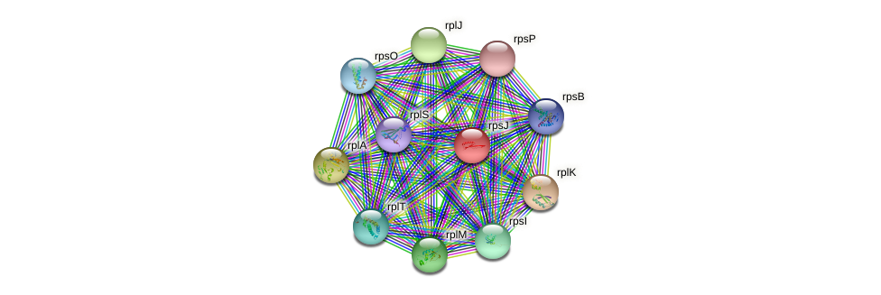 rpsJ protein (Nocardioides sp. JS614) - STRING interaction network