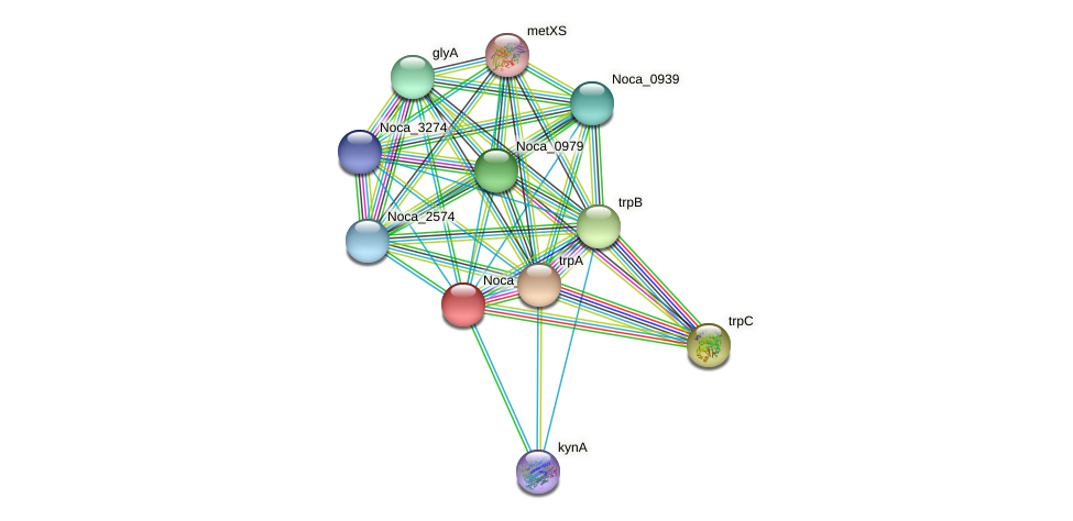 Noca_3949 protein (Nocardioides sp. JS614) - STRING interaction network