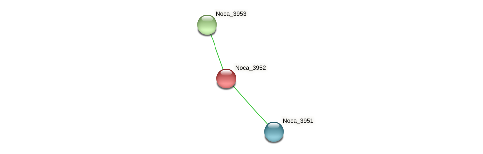 Noca_3952 protein (Nocardioides sp. JS614) - STRING interaction network