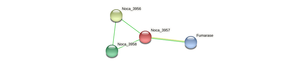 Noca_3957 protein (Nocardioides sp. JS614) - STRING interaction network