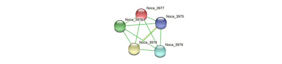 Noca_3977 protein (Nocardioides sp. JS614) - STRING interaction network
