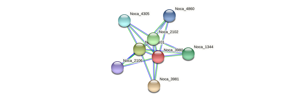 Noca_3980 protein (Nocardioides sp. JS614) - STRING interaction network