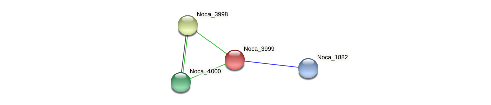 Noca_3999 protein (Nocardioides sp. JS614) - STRING interaction network