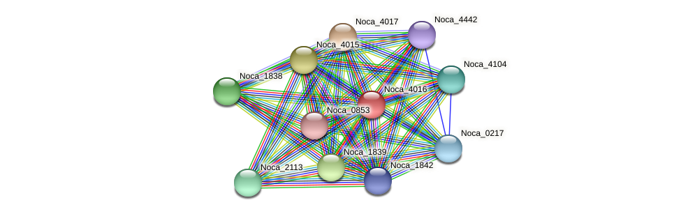 Noca_4016 protein (Nocardioides sp. JS614) - STRING interaction network