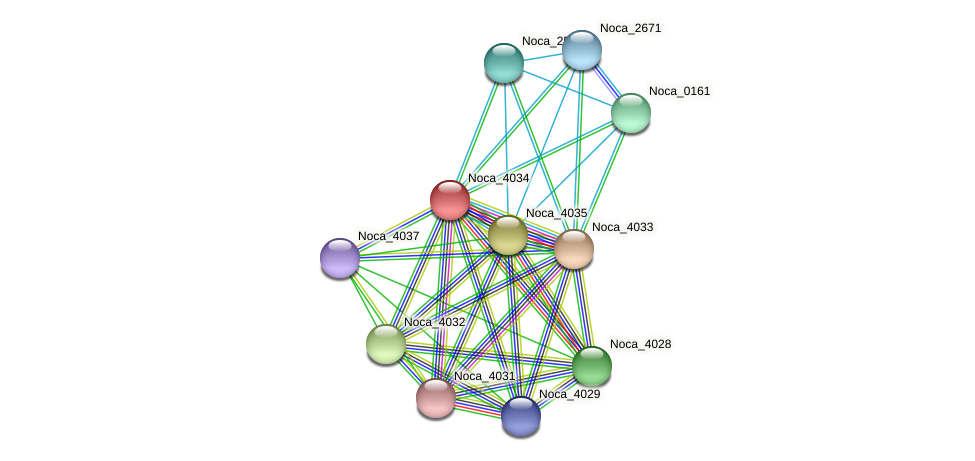 Noca_4034 protein (Nocardioides sp. JS614) - STRING interaction network