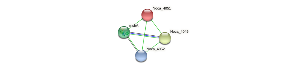 Noca_4051 protein (Nocardioides sp. JS614) - STRING interaction network