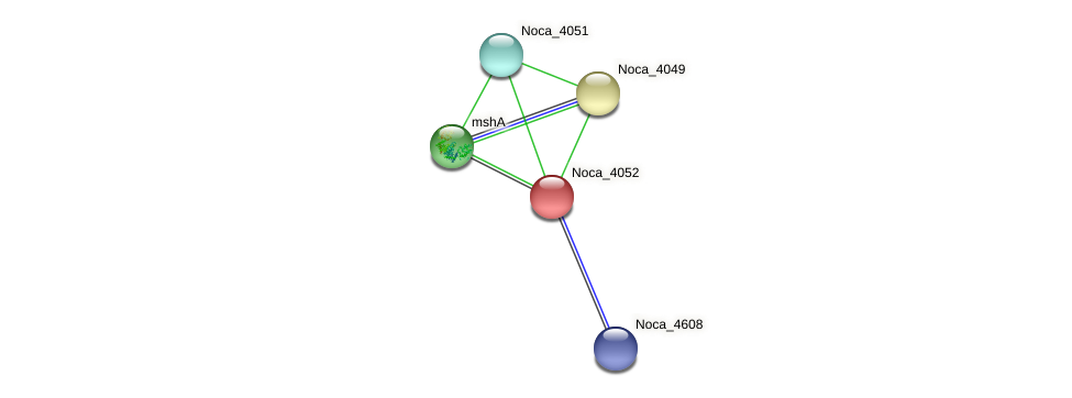 Noca_4052 protein (Nocardioides sp. JS614) - STRING interaction network