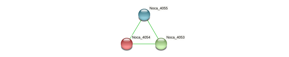 Noca_4054 protein (Nocardioides sp. JS614) - STRING interaction network
