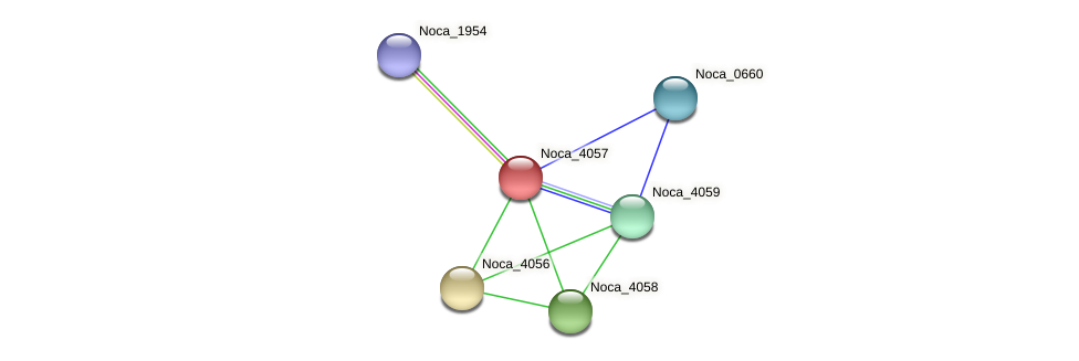 Noca_4057 protein (Nocardioides sp. JS614) - STRING interaction network