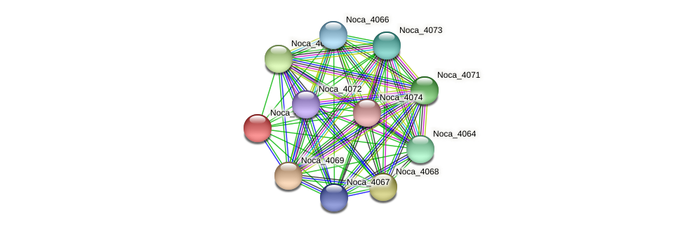 Noca_4065 protein (Nocardioides sp. JS614) - STRING interaction network