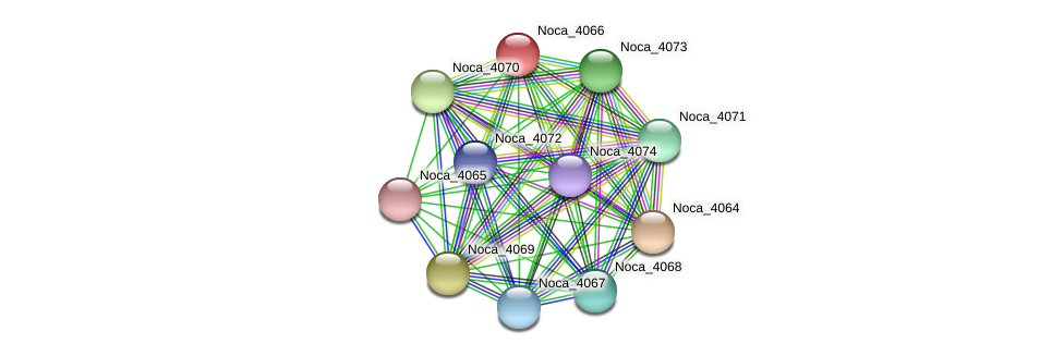 Noca_4066 protein (Nocardioides sp. JS614) - STRING interaction network