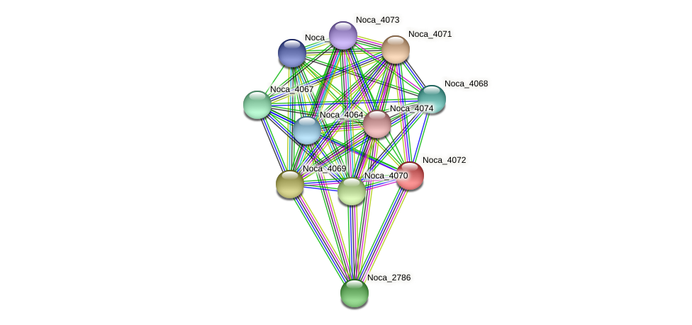 Noca_4072 protein (Nocardioides sp. JS614) - STRING interaction network