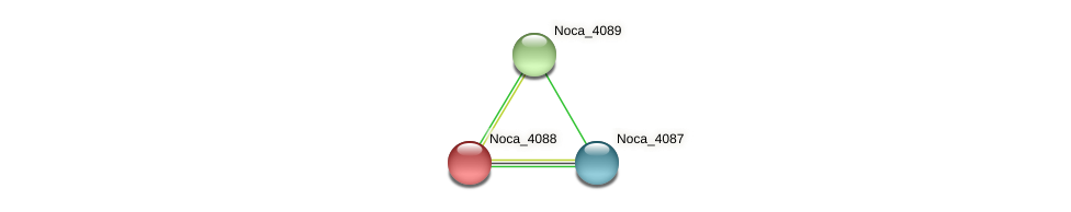 Noca_4088 protein (Nocardioides sp. JS614) - STRING interaction network