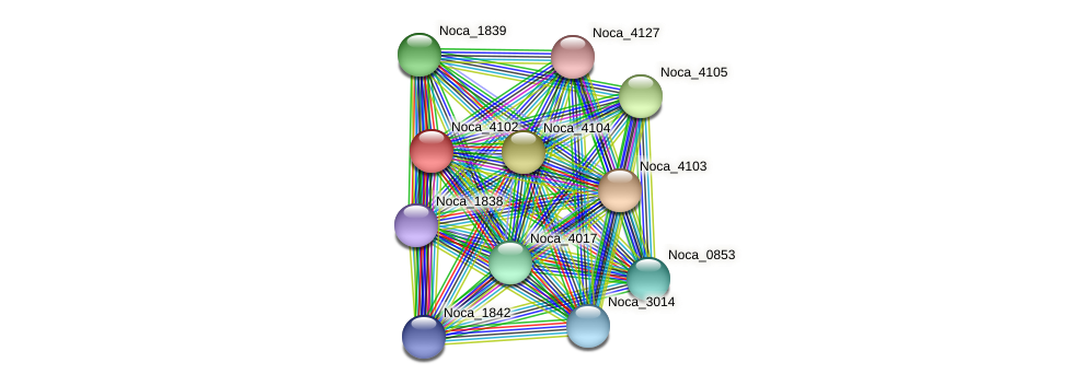 Noca_4102 protein (Nocardioides sp. JS614) - STRING interaction network