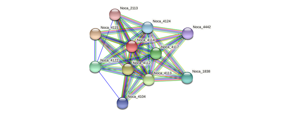 Noca_4114 protein (Nocardioides sp. JS614) - STRING interaction network