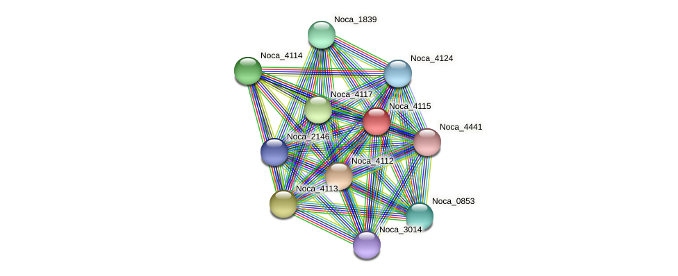 Noca_4115 protein (Nocardioides sp. JS614) - STRING interaction network