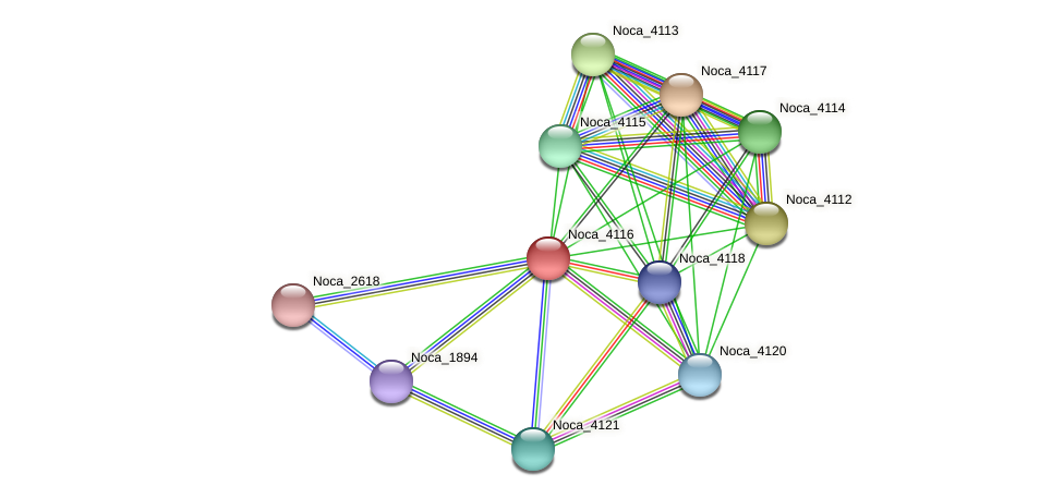 Noca_4116 protein (Nocardioides sp. JS614) - STRING interaction network