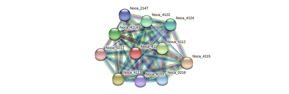Noca_4117 protein (Nocardioides sp. JS614) - STRING interaction network