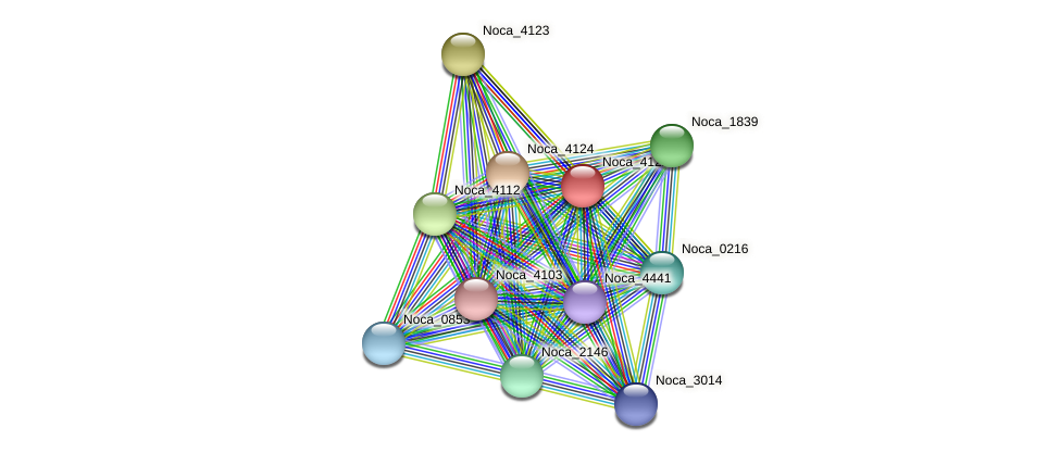 Noca_4122 protein (Nocardioides sp. JS614) - STRING interaction network
