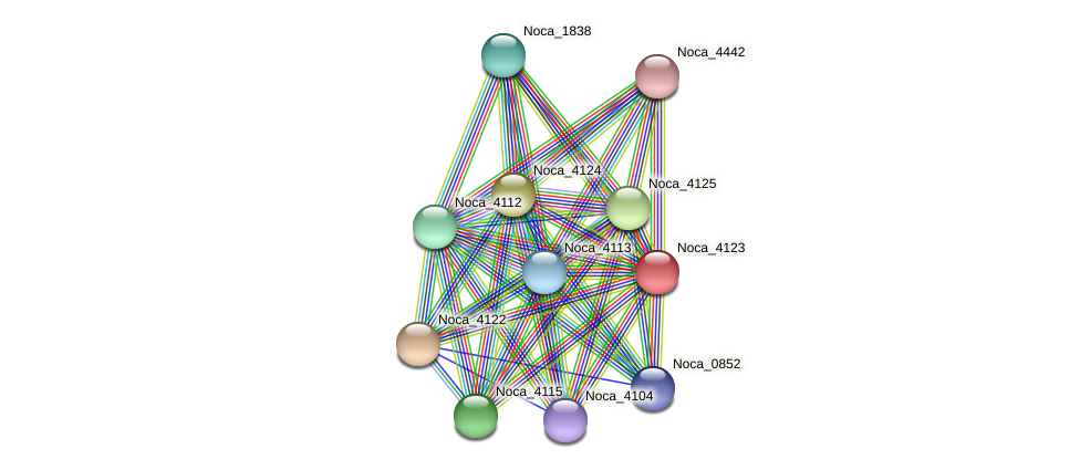 Noca_4123 protein (Nocardioides sp. JS614) - STRING interaction network