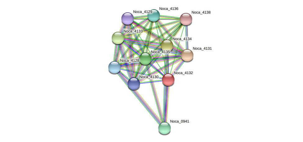 Noca_4132 protein (Nocardioides sp. JS614) - STRING interaction network