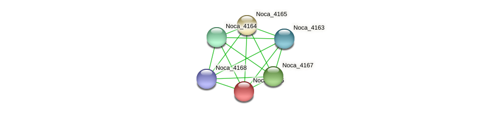 Noca_4166 protein (Nocardioides sp. JS614) - STRING interaction network