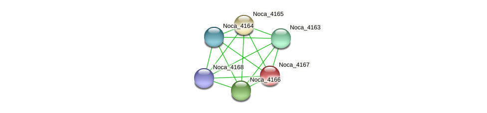 Noca_4167 protein (Nocardioides sp. JS614) - STRING interaction network