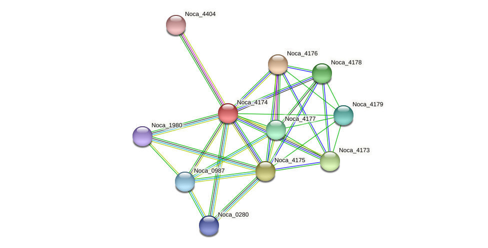 Noca_4174 protein (Nocardioides sp. JS614) - STRING interaction network