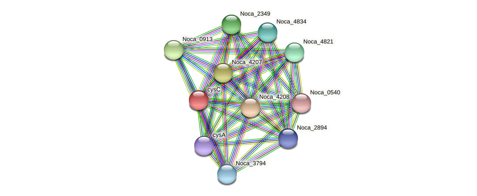 Noca_4205 protein (Nocardioides sp. JS614) - STRING interaction network